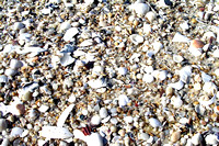 Beach Shells and Stones